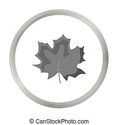 Maple Leaf vector icon in monochrome style for web - Maple...