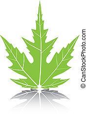 Maple Leaf Vector Illustration.