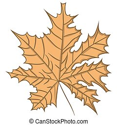 Maple Leaf. vector illustration. Drawing by hand.