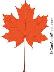 Maple Leaf Vector Illustration