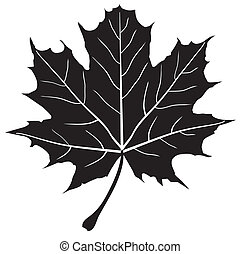 Maple Leaf - vector maple leaf silhouette
