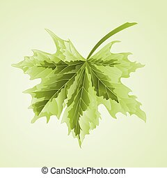 Maple leaf vector.eps - Maple leaf acer platanoides...