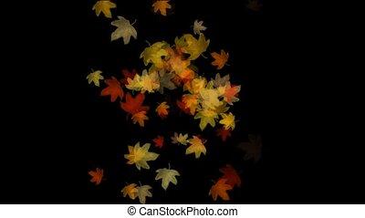 Maple leafs falling background, Alpha Channel