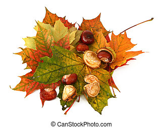 maple leaves and chestnuts #2