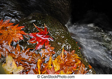 Maple leaves and water fall in Japan Autumn