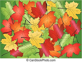 Maple leaves background,vector