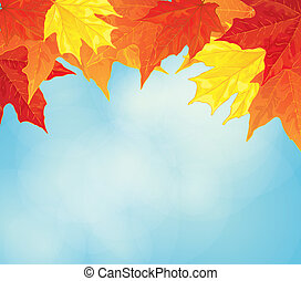 maple leaves - autumn background with maple leaves