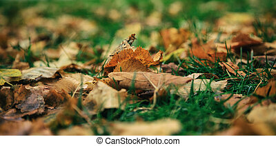 Maple leaves closeup fallen on the ground at autumn