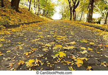 Maple leaves fall
