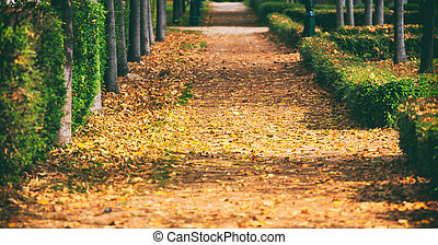 Maple leaves fallen on a park path at autumn