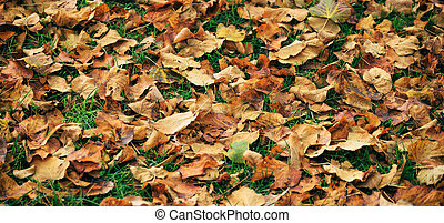 Maple leaves fallen on the ground at autumn