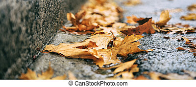 Maple leaves fallen on the road at autumn