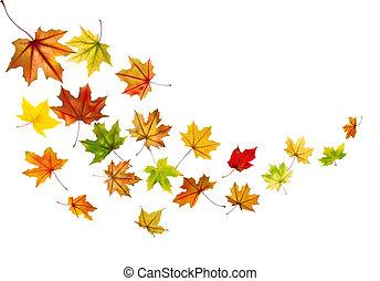 Maple leaves falling - Maple autumn falling leaves, vector ...