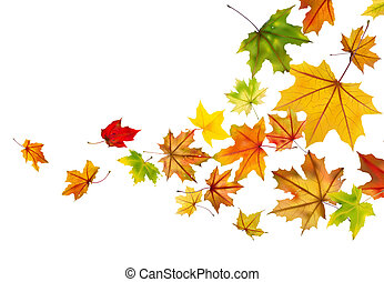 Maple leaves falling - Maple autumn falling leaves, vector ...