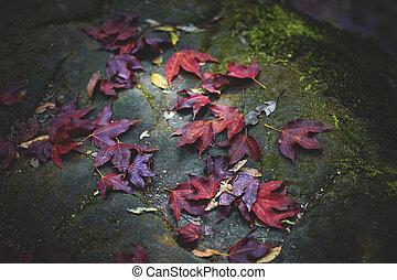 maple leaves falling on forest floor in autumn season