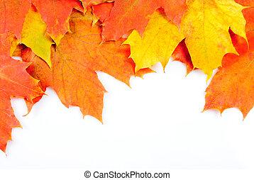 Maple leaves frame