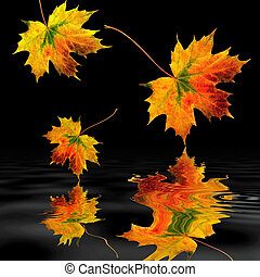 Maple Leaves in Autumn - Maple leaf abstract in the colors ...