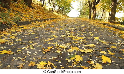 Maple leaves in autumn park on the cobblestone
