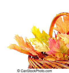 Maple leaves in basket