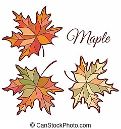 Maple leaves in stained illustration.