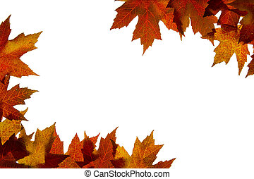Maple Leaves Mixed Fall Colors Backlit 4