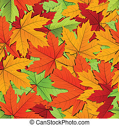 Maple leaves of different colors