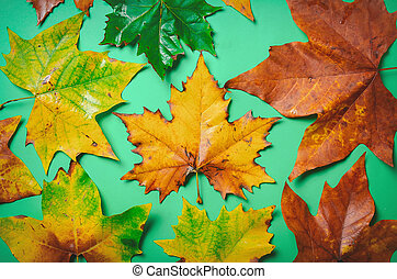 Maple leaves on green background.