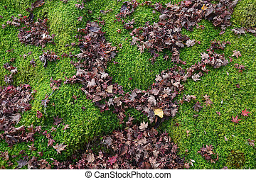 Maple leaves on moss for backgrond