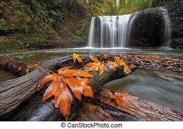 Maple Leaves on Tree Log at Hidden Falls