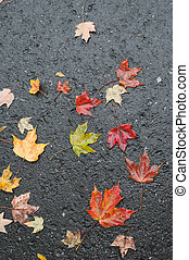 Maple leaves on wet road