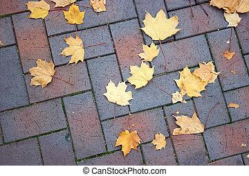 Maple leaves scattered on a cobblestone sidewalk.