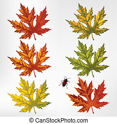 Maple leaves, set. Vector illustrat