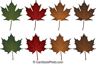 Maple Leaves-Sugar and Norway - Illustration of Sugar maple ...