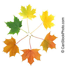 Maple Leaves Transformation - Season concept. Few various...
