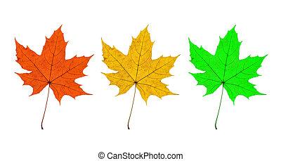 Maple Leaves Trio