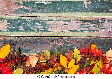 maple outono sai, sobre, antigas, verde, madeira, fundo, com, espaço cópia