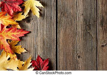 maple outono sai, sobre, madeira, fundo