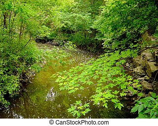 maple paradise - Ontario, Taylor Creek