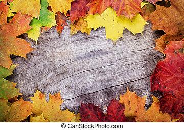 maple sai, ligado, madeira, superfície