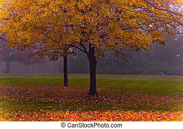 Maple scene on a foggy fall morning