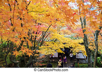 maple season at fall for adv or others purpose use