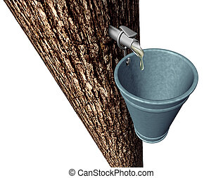 Maple Syrup - Maple syrup harvesting as tree with sap...