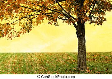 Maple tree against yellow sunset autumn sky