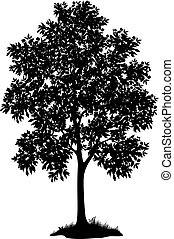 Maple tree with leaves and grass, black silhouette on white background. Vector