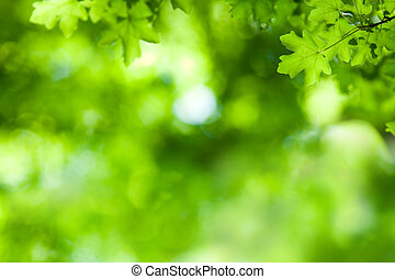 Maple Tree Background - Background with Maple Tree Leaves