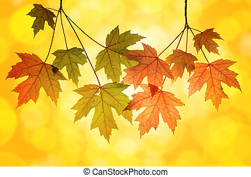 Maple Tree Branches with Blurred Background