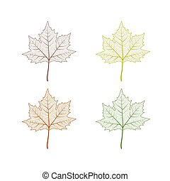 Maple tree leaf set. Autumn leaves isolated vector illustration on white background. Fall decoration clip art