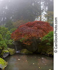 Maple Tree Over Waterfall at Japanese Garden
