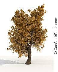 Maple Tree over white background