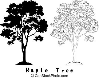 Maple Tree Silhouette, Contours and Inscriptions - Maple...